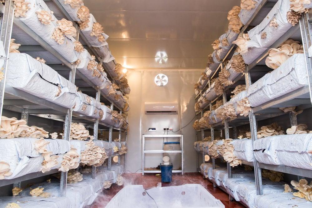 103ab998c455 Ako sa pestuje a zbiera slovenská hliva ustricová  - cerstvi.sme.sk