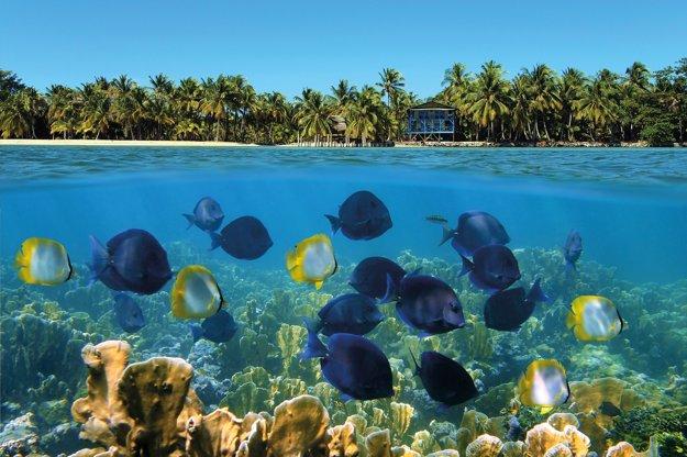 Farebné koralové útesy pri Bocas del Toro na karibskom pobreží Panamy.
