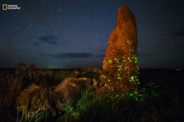 Bioluminescence Ecosystem