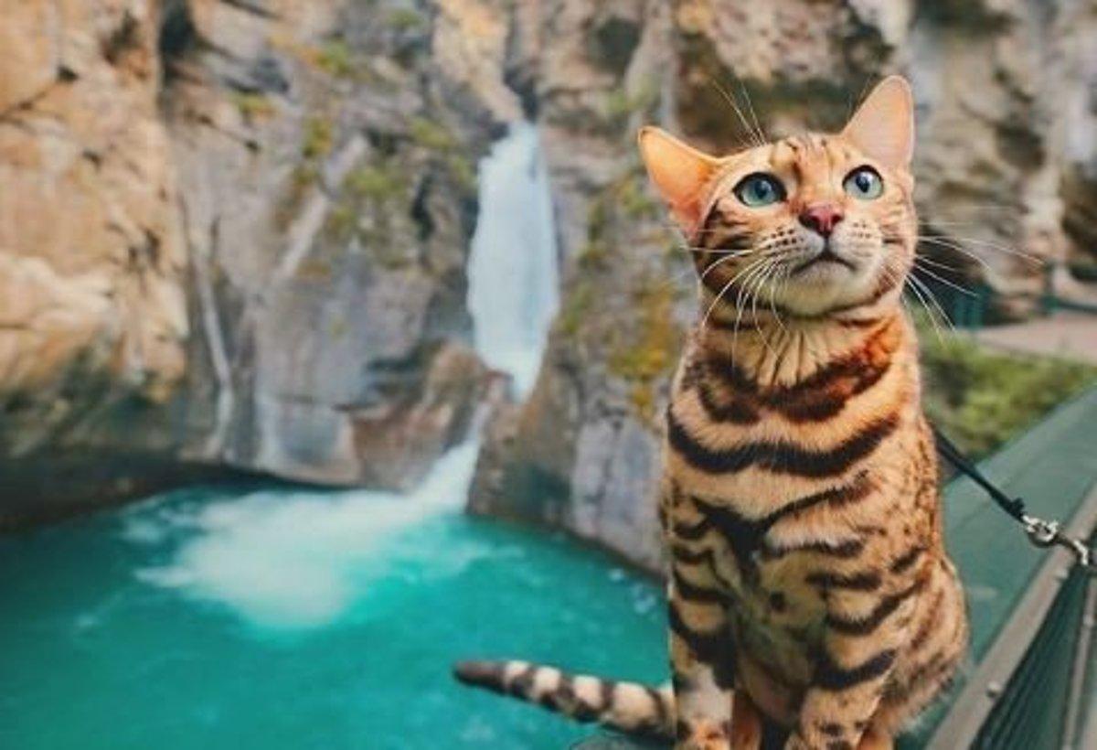 Bengálska mačka Suki vyzerá ako malý tiger a spoznáva svet. Má úžasné  cestovateľské fotky 27a41708668