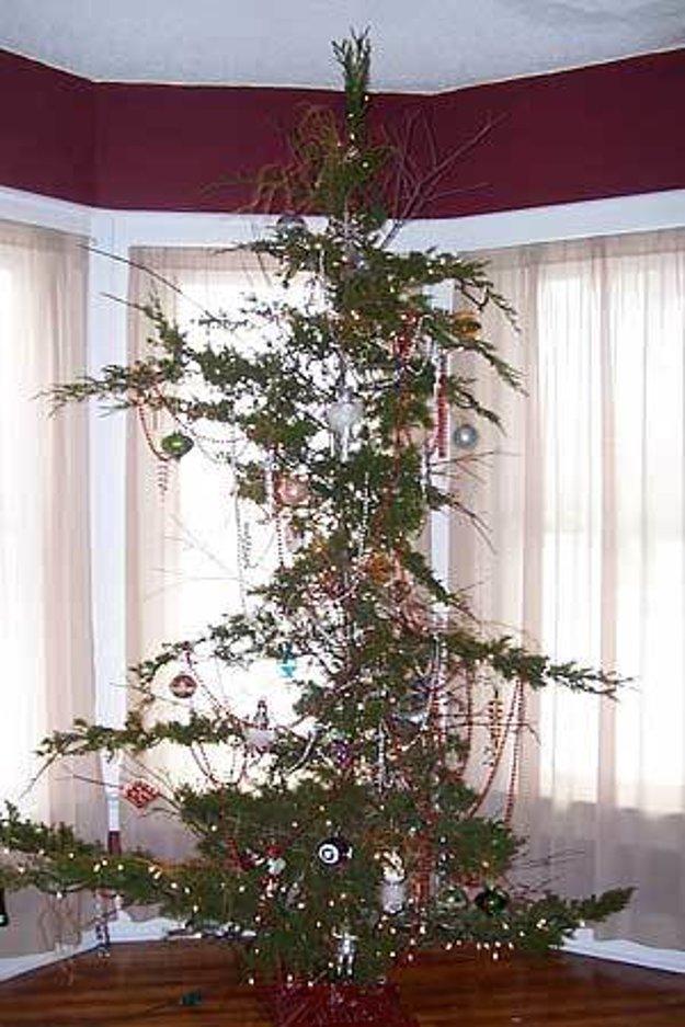 strom borievka