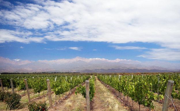 Vinohrad na úpätí Ánd v provincii Mendoza