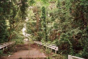 Les pohlcuje cestu pri meste Motooka Shimizu
