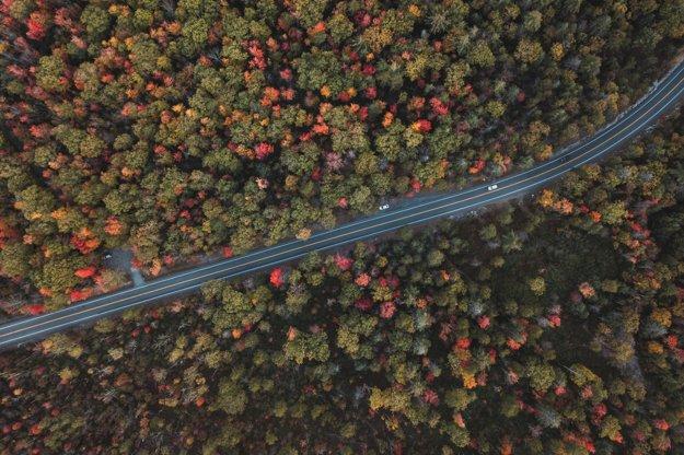 Cesta lesmi v oblasti Minnewaska State Park Preserve.