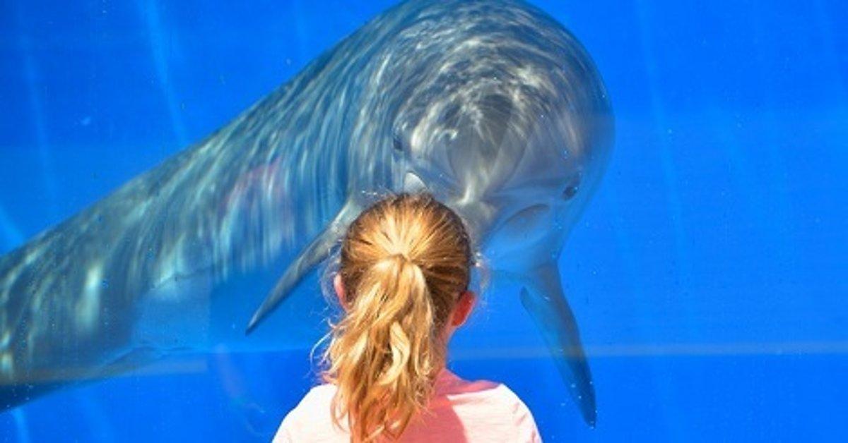 delfín sex videá Análny sex s veľkými čiernymi kohúty