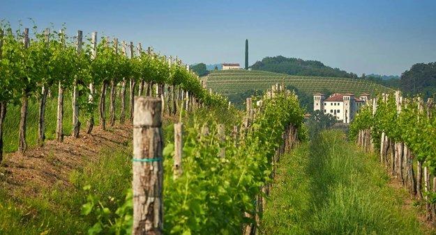 Slovinské vinohrady