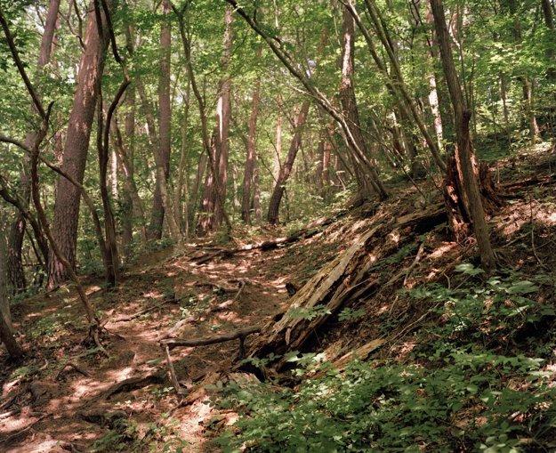 Popadané stromy blokujú cestu na svätú horu, ktorá vedie k svätyni Yamatsumi z jedenásteho storočia v Toratori, Itate, 40 kilometrov na severozápad od poškodenej jadrovej elektrárne.