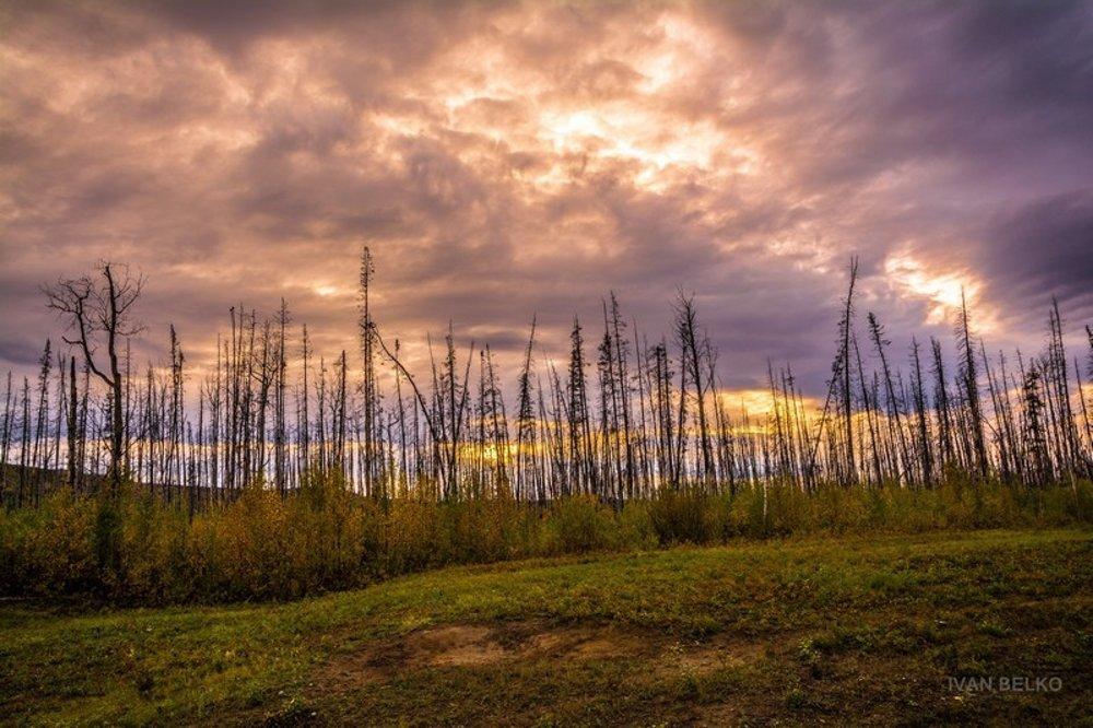 Západ slnka nad zhoreným lesom. Rozsiahle lesné požiare vyčíňajú každé leto naprieč celou krajinou.