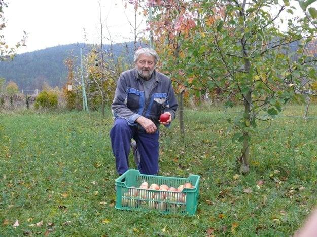 Václav Linda vypestoval najkrajšie jablko roku 2017.