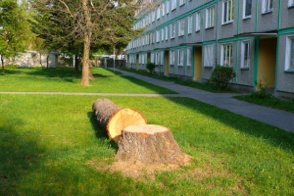 Douglasku na Osvienčimskej ulici vyrúbali vo vegetačnom období.
