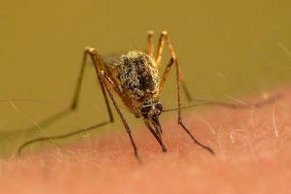 Témou tohtoročného Svetového dňa zdravia sú aj infekčné ochorenia prenášané komármi.