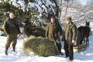 Seno na prikrmovanie lesnej zveri v zime vyvážajú do odľahlejších častí na saniach, ktoré ťahá kôň.