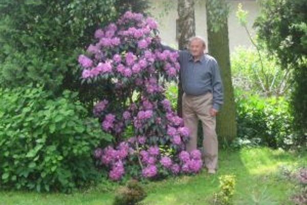 Pätnásťročný rododendron mal tento rok až 238 kvetov.