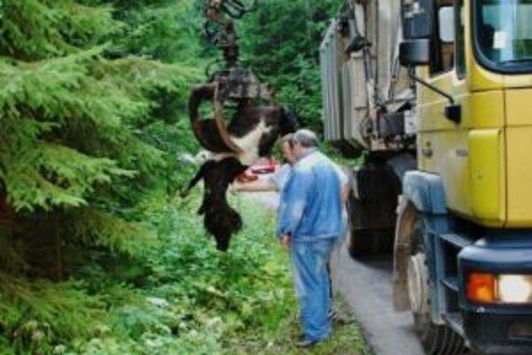 Uhynutého poníka niekto pohodil pri ceste. Mŕtve zviera odviezlo vozidlo kafilérie.