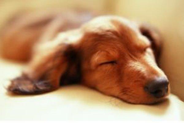 Tomuto spáčovi je jedno či je letný alebo zimný čas. Pospí si kedy chce.