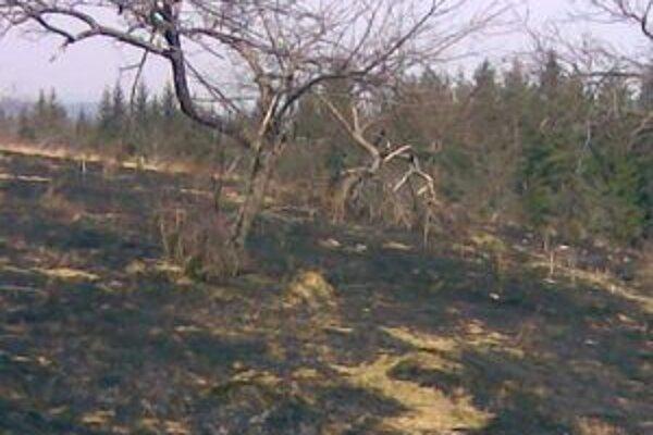 Lesných požiarov je v poslednom čase čoraz viac.
