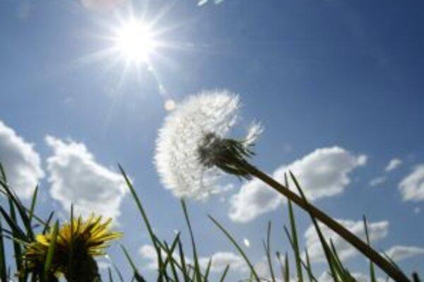Z takejto lúky plnej púpav sa môžu alergici tešiť len pohľadom.
