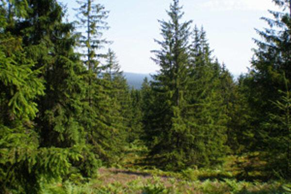 Lesné porasty na Kysuciach rozdelili podľa rozsahu poškodenia.