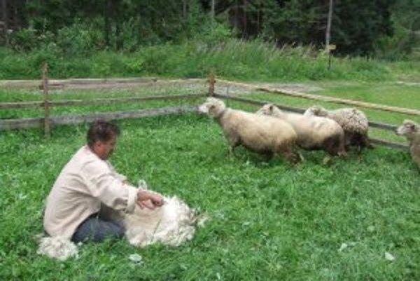 K Ovčiarskej nedeli už tradične patrí práca s ovcami.