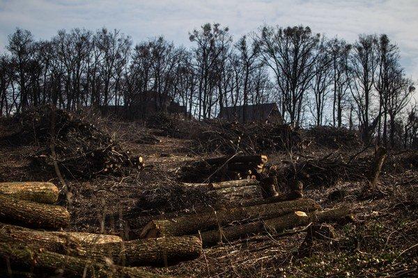 Vyťatý les na Kolibe vo februári.