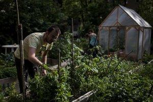 Komunitná záhrada.