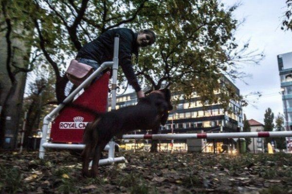 Psí park v Starom Meste.