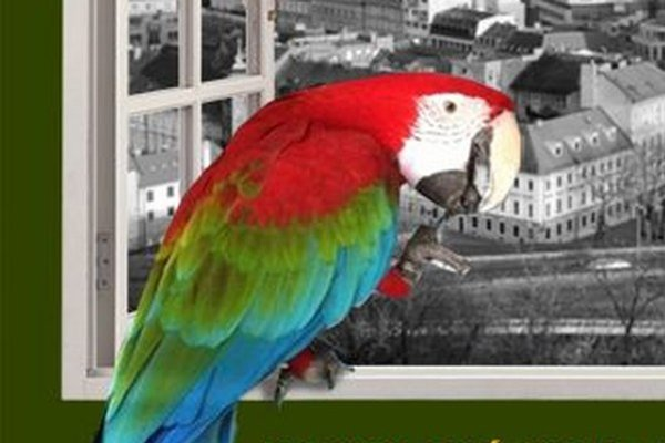Papagáj Ara, ktorý sa stratil.