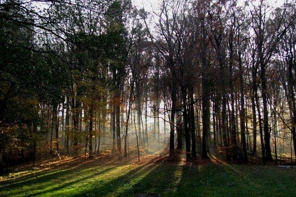 Lesy nad Bratislavou pri rybníku U Slivu.