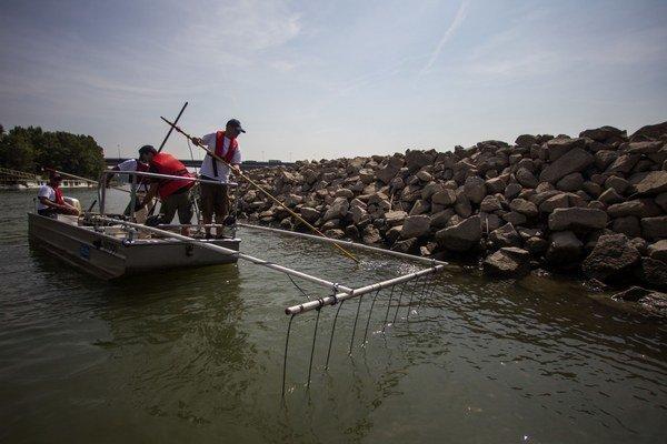 Aby získali vhodné vzorky, ichtyológovia chytajú ryby pomocou elektriny.