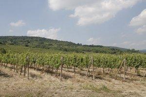 Zmenia sa súčasné vinohrady nad Račianskou ulicou na stavebné parcely?