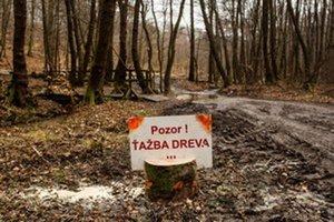 Stopy po ťažbe v mestských lesoch.