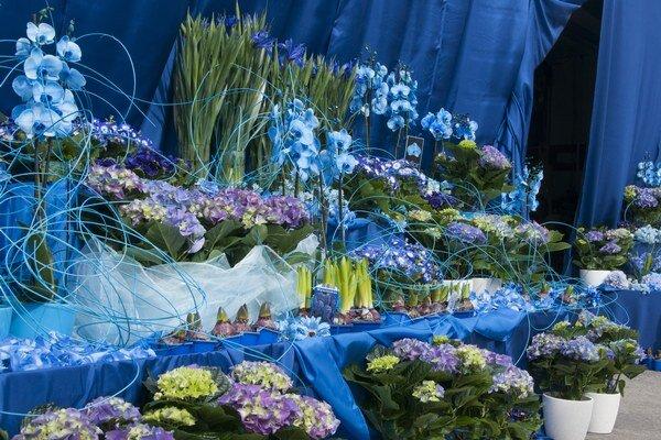 Na jednom mieste bolo 351 modrých kvetín.