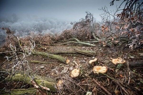 Časť lesa na Kolibe krátko po decembrovom výrube.