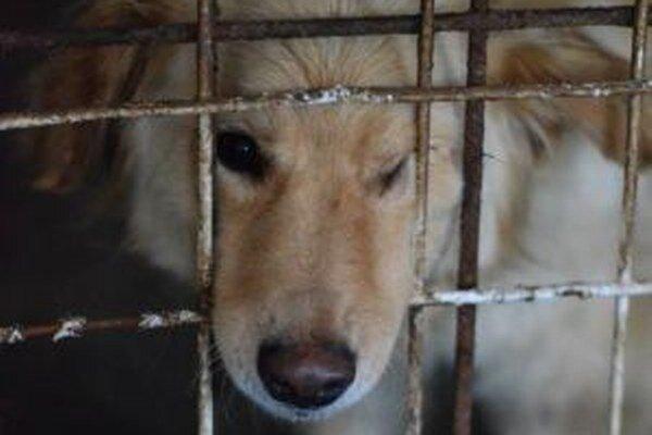 Na adopciu čaká v žiarskom útulku viac ako 50 psov, medzi nimi aj dvojročná Lunka.