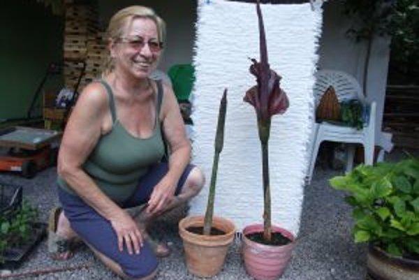 Zmijovec. Eva Hurtíková je na túto rastlinu vo svojej záhrade hrdá.