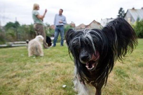 Psov budú kontrolovať inšpektori verejného poriadku.