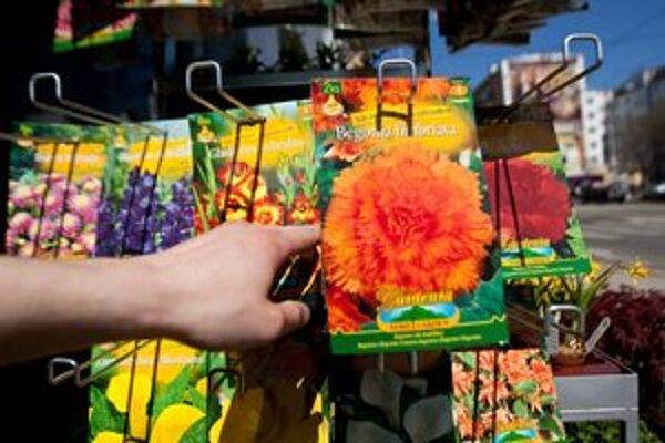 Kvety vysadia najmä v bratislavskom Starom meste.