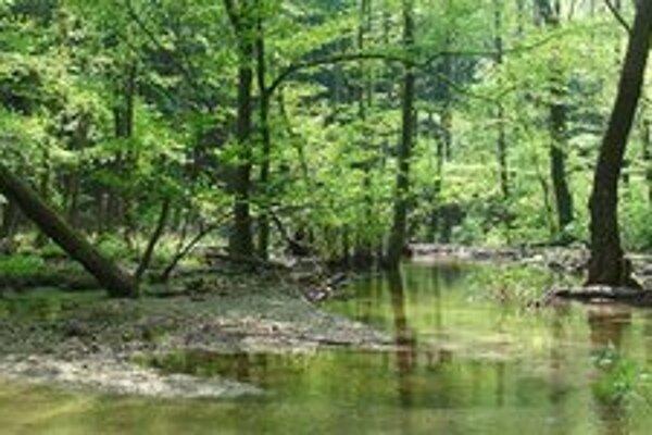 Desaťtisíc ľudí sa v petícii vyjadrilo za vyhlásenie prírodnej rezervácie v okolí horného toku Vydrice.