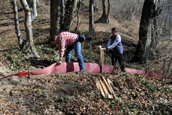 Ropuchám stavajú zábrany, potom ich budú dobrovoľníci prenášať do rybníka.