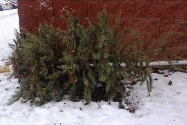 Stromčeky sa po sviatkoch budú odvážať od kontajnerov.