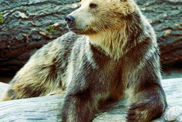 Ako sa medveď dostal do Jura, je záhadou.