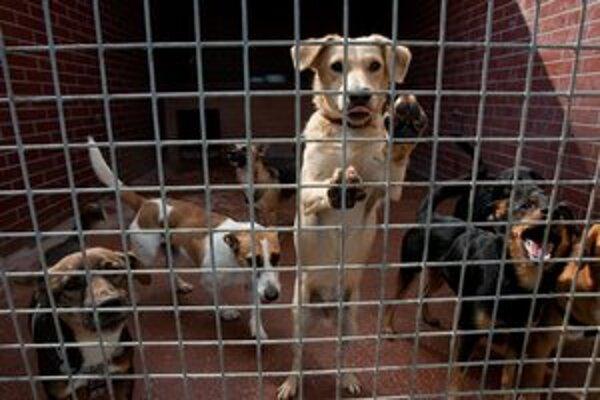V bratislavskom útulku je 274 psov.