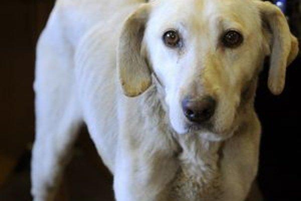 Do útulkov sa dostávajú aj vyhladované a inak týrané psy.