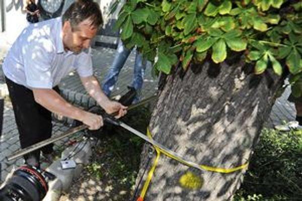 Stromy vyšetrili špeciálnym tomografom s cieľom určiť ich zdravotný stav. Na snímke Tomáš Šembera meria obvod stromu.