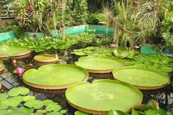 Botanická záhrada.