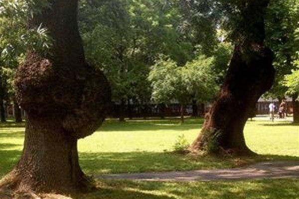 V záhrade možno oddychovať pod veľkými stromami.