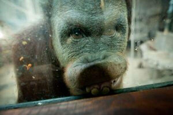 Návšteva v zoo.
