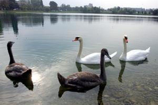 Odborníci namietajú, že výstavba môže mať zlý vplyv na celkový stav Štrkovca, najmä na vodné vtáctvo.