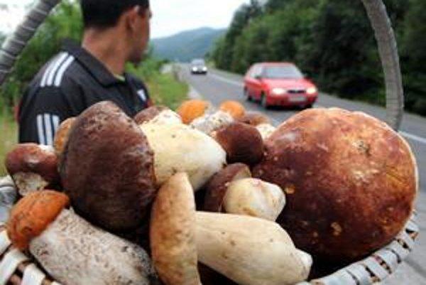 Hubári, sviatoční i pravidelní, nosia v posledných dňoch plné košíky. Huby rastú doslova ako huby po daždi.