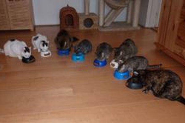Mačky v depozite – petržalskom byte. Čakajú na svojich adoptívnych rodičov.